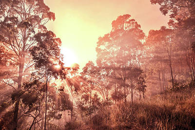 Royalty-Free and Rights-Managed Images - Golden Dawn by Az Jackson