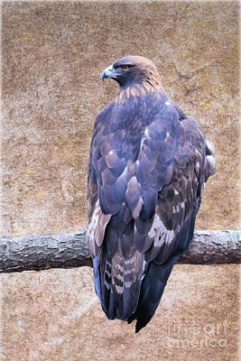 Abstract Works - Golden Eagle Profile by Diann Fisher