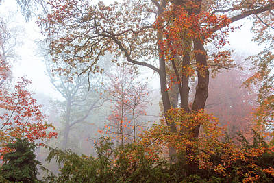 Olympic Sports - Golden Frame of Fall Trees 1 by Jenny Rainbow