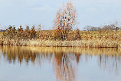 Airplane Paintings - Golden Highlights by Debbie Oppermann