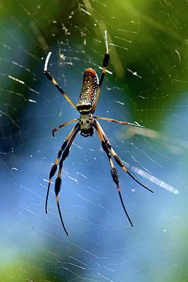 Movie Tees - Golden Orb Weaver Spider by Matthew Lerman