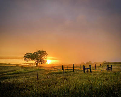 Photograph - Golden Skies By The Green Pasture by Nazeem Sheik