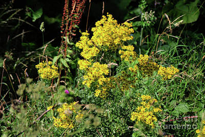 Urban Abstracts - Goldenrod by Doc Braham