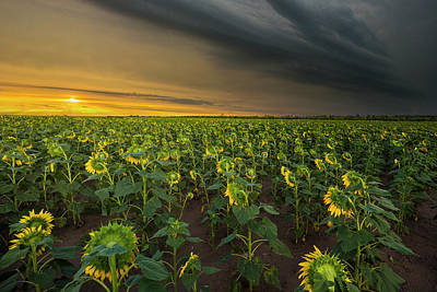 Music Figurative Potraits - Good Morning Sunshine by Aaron J Groen
