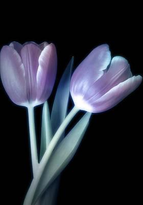 Keith Richards - Gorgeous Tulip Duo by Johanna Hurmerinta