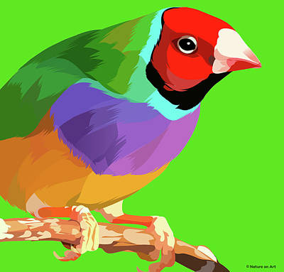 Royalty-Free and Rights-Managed Images - Gouldian finch by Stars on Art