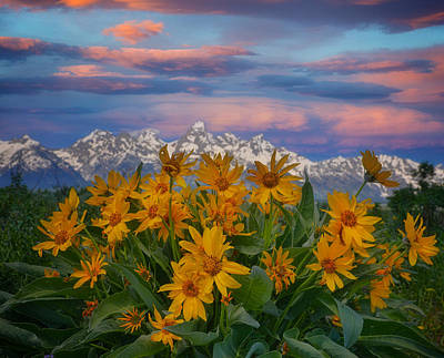 Winter Animals Rights Managed Images - Grand Teton Sunset Flowers Royalty-Free Image by Dan Sproul