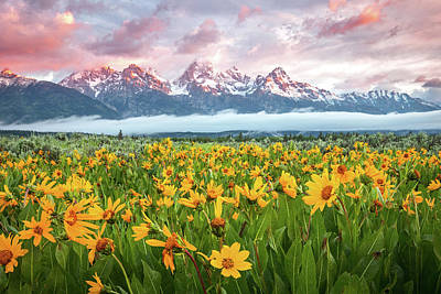 Water Droplets Sharon Johnstone - Grand Teton Wildflower Sunrise by Johnny Adolphson