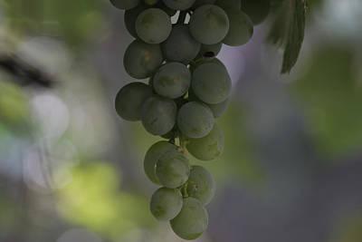 Photograph - Grapes by Byron Fair