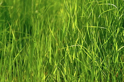 Photograph - Grass by Christopher Johnson