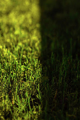 Photograph - Grass by Nature Photography
