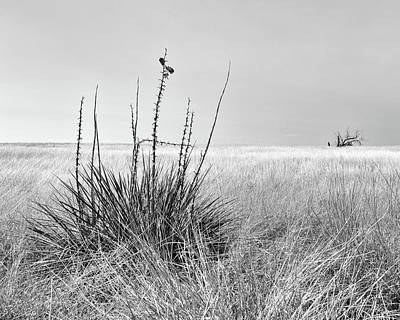 Achieving - Grasslands monochrome by Murray Rudd