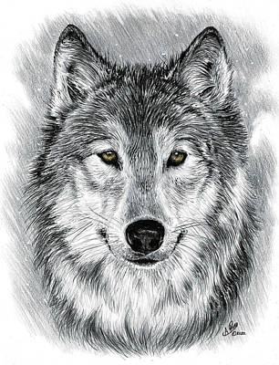 Animals Royalty-Free and Rights-Managed Images - Gray Wolf  by Andrew Read