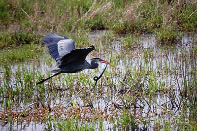 Photograph - Great Blue Heron and Garter Snake by Rose De Dan