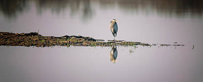 Just Desserts Rights Managed Images - Great Blue Heron Royalty-Free Image by Joan Carroll