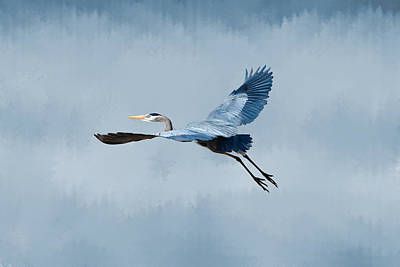 David Bowie Royalty Free Images - Great Blue Heron Liftoff Royalty-Free Image by Marlin and Laura Hum