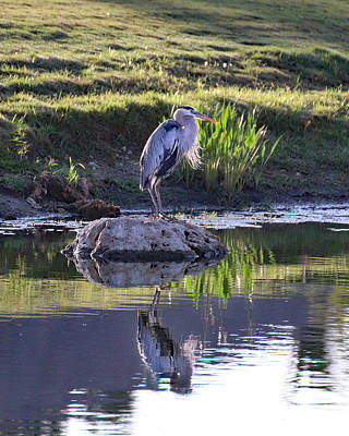 Vintage Chevrolet - Great Blue Heron Reflection by David T Wilkinson