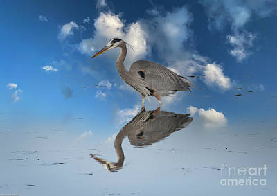 Animals Royalty-Free and Rights-Managed Images - Great Blue Heron Reflection by Mitch Shindelbower