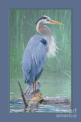 Animals Digital Art - Great Blue Heron Surveys the Pond by Kathryn Yoder