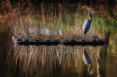 Door Locks And Handles - Great Blue Heron, Wild Lake, Columbia, Maryland. by Geoffrey Baker