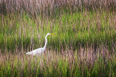 Pittsburgh According To Ron Magnes - Great Egret in the Marsh at Cedar Point Recreation Area by Bob Decker
