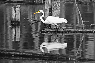 The Bunsen Burner - Great Egret Reflections Selective by Marlin and Laura Hum