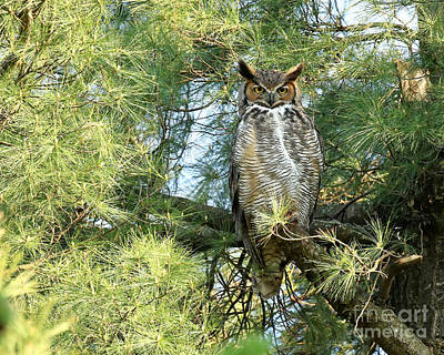 Animals Royalty-Free and Rights-Managed Images - Great horned goddess by Heather King