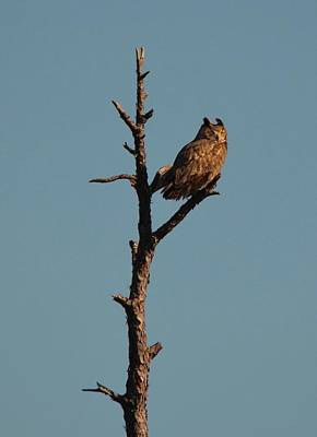 Hood Ornaments And Emblems - Great Horned Owl by Carla Parris