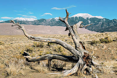 Photograph - Great Sand Dunes National Park Twisted Tree by Aloha Art