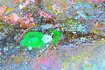 Jerry Sodorff Royalty-Free and Rights-Managed Images - Green Anemone CS by Jerry Sodorff