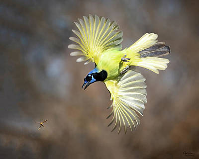 Wild Horse Paintings - Green Jay chasing Wasp by Judi Dressler