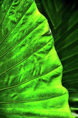 Classic Golf - Green Leaf Texture 1 by Helen Filatova