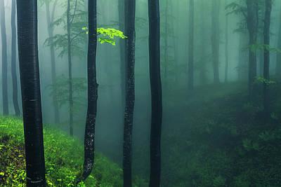 Patriotic Signs - Green Mist by Evgeni Dinev