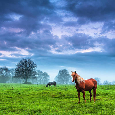 Animals Photos - Green Morn by Evgeni Dinev