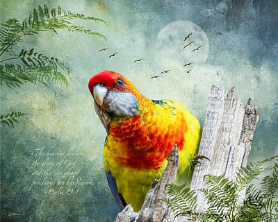 Rolling Stone Magazine Covers - Green Rosella Hybrid, of Tasmania by Cindy Collier Harris