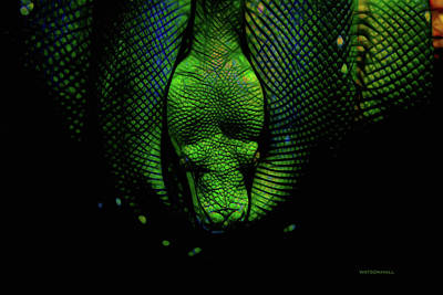 Spot Of Tea Royalty Free Images - Green Viper Royalty-Free Image by Marlene Watson