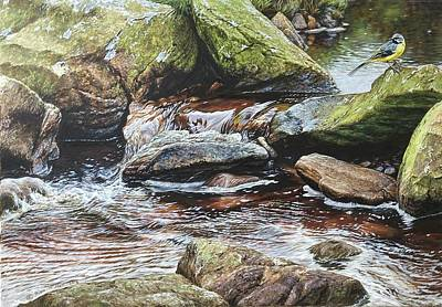 Animals Paintings - Grey Wagtail by Alan M Hunt