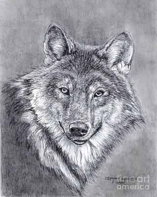 Drawing - Grey Wolf in Pencil by Stephany Elsworth