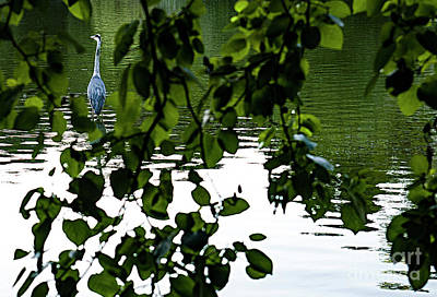 Target Threshold Nature - GREYThe grey heron in the Buttes-Chaumont  park by Alexander Vinogradov