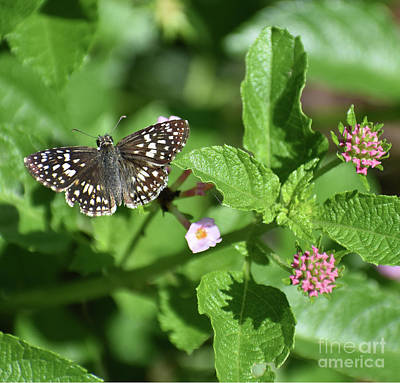 Chemical Glassware - Grizzled Skipper Butterfly by Skip Willits