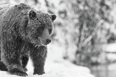 Abstract Airplane Art - Grizzly bear by a snowy stream by Murray Rudd