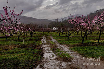 Catch Of The Day - Gross Orchard Springtime by Norma Brandsberg