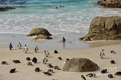 Popstar And Musician Paintings Royalty Free Images - Group African Penguins on the beach in South Africa Royalty-Free Image by Patricia Hofmeester