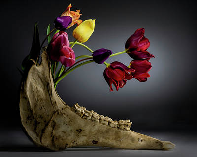 Photograph - Growth - a study in flowers and bone. by Art Whitton