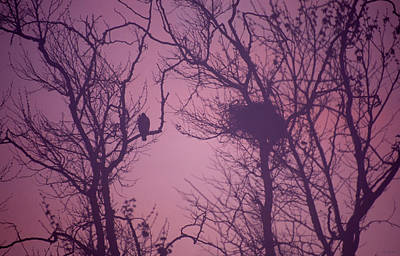 Valentines Day - Guardian by Soli Deo Gloria Wilderness And Wildlife Photography