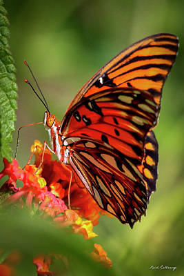 Moody Trees Rights Managed Images - Gulf Fritillary Butterfly Passion Butterfly Lantana Flower Wildlife Art Royalty-Free Image by Reid Callaway