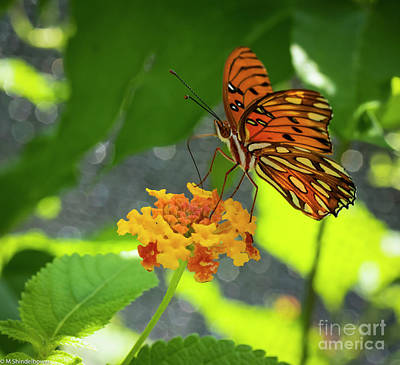 Celebrity Watercolors - Gulf Fritillary by Mitch Shindelbower