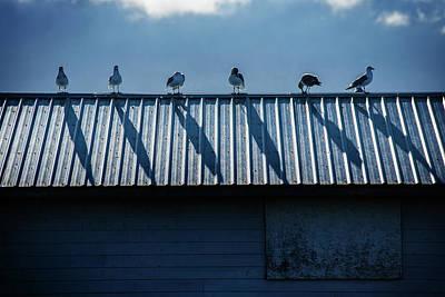 Photograph - Gull Chorus Line by Bud Simpson