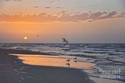 Beaches And Waves Rights Managed Images - Gulls at Sunrise Royalty-Free Image by Catherine Sherman