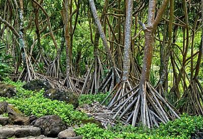 Venice Beach Bungalow - Hala Forest Kauai  by Heidi Fickinger